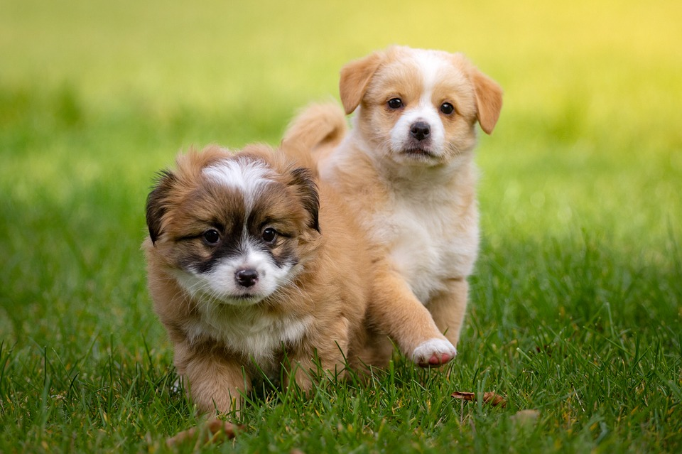 Top 20 Best Dog Breeds to Own for 2019