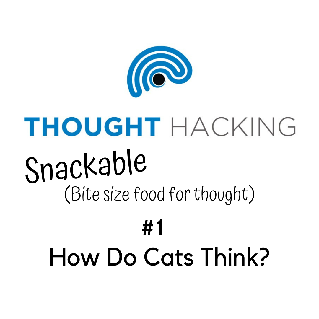 Thought Hacking Snackable #1: How Do Cats Think?