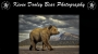 Artwork for Learn Alaska Bear Photography from Kevin Dooley