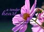Artwork for A Tender Heart