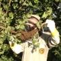 Artwork for Matt Brake Discusses how he keeps Bees in Hampshire - KM032