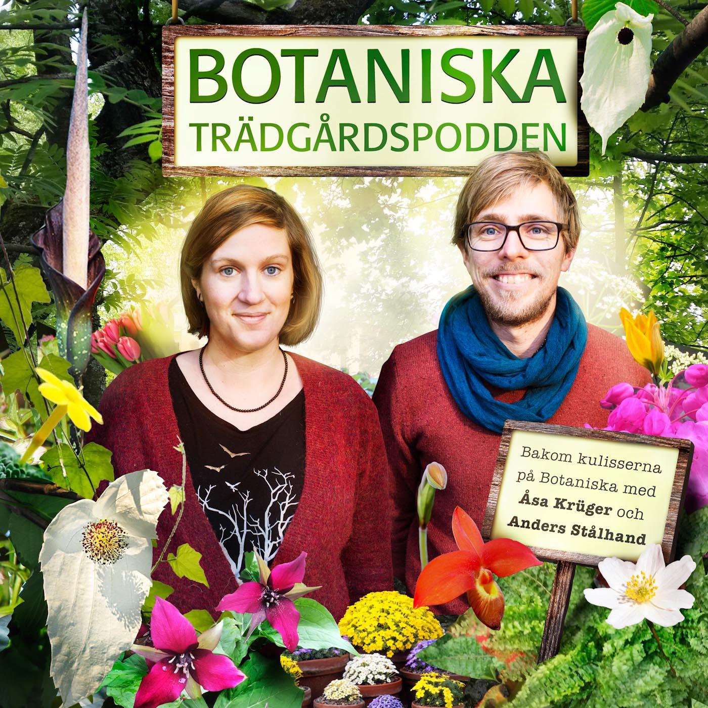Botaniska trädgårdspodden show art