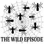 Artwork for Anelosimus eximius : The Social Spider