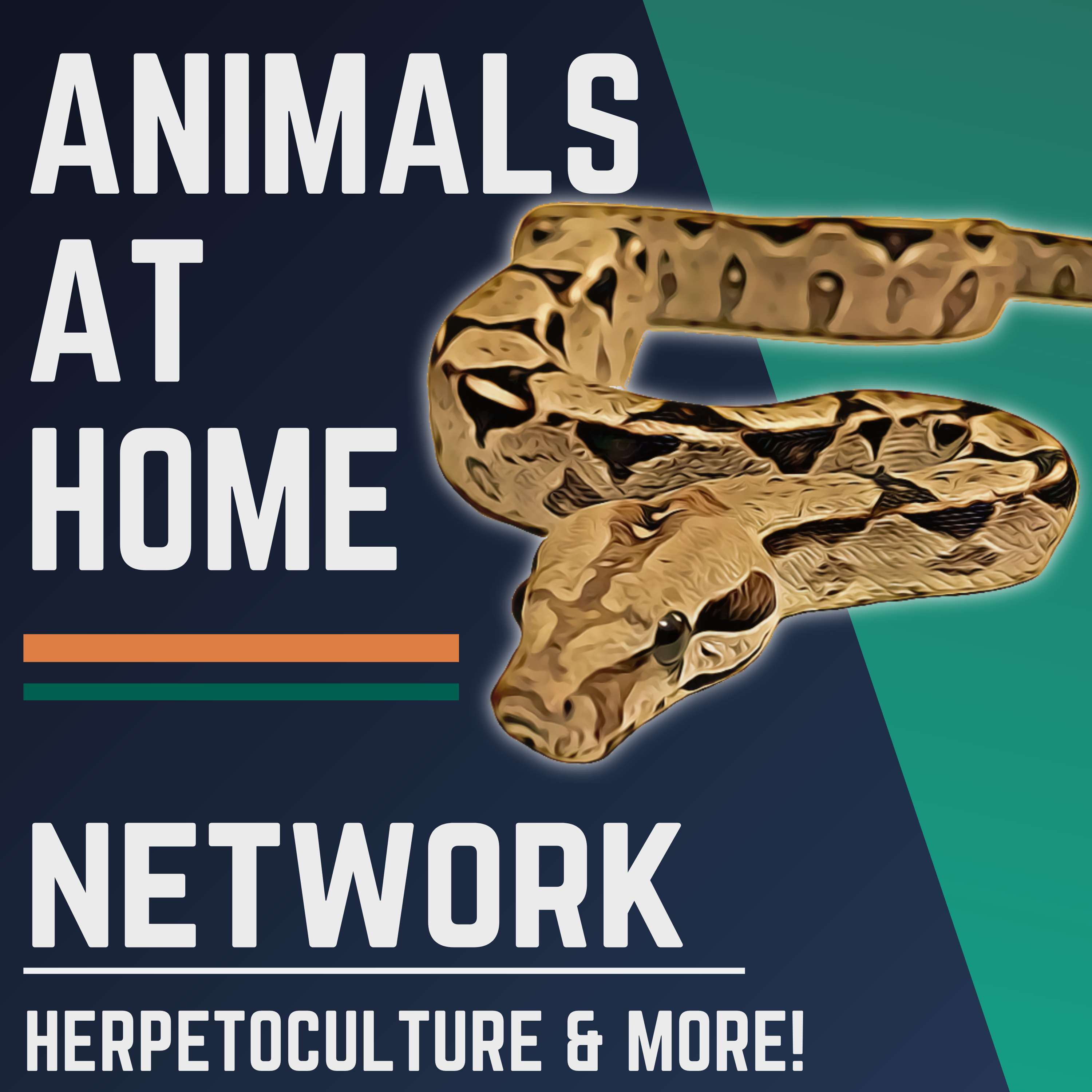 The Animals at Home Network show art