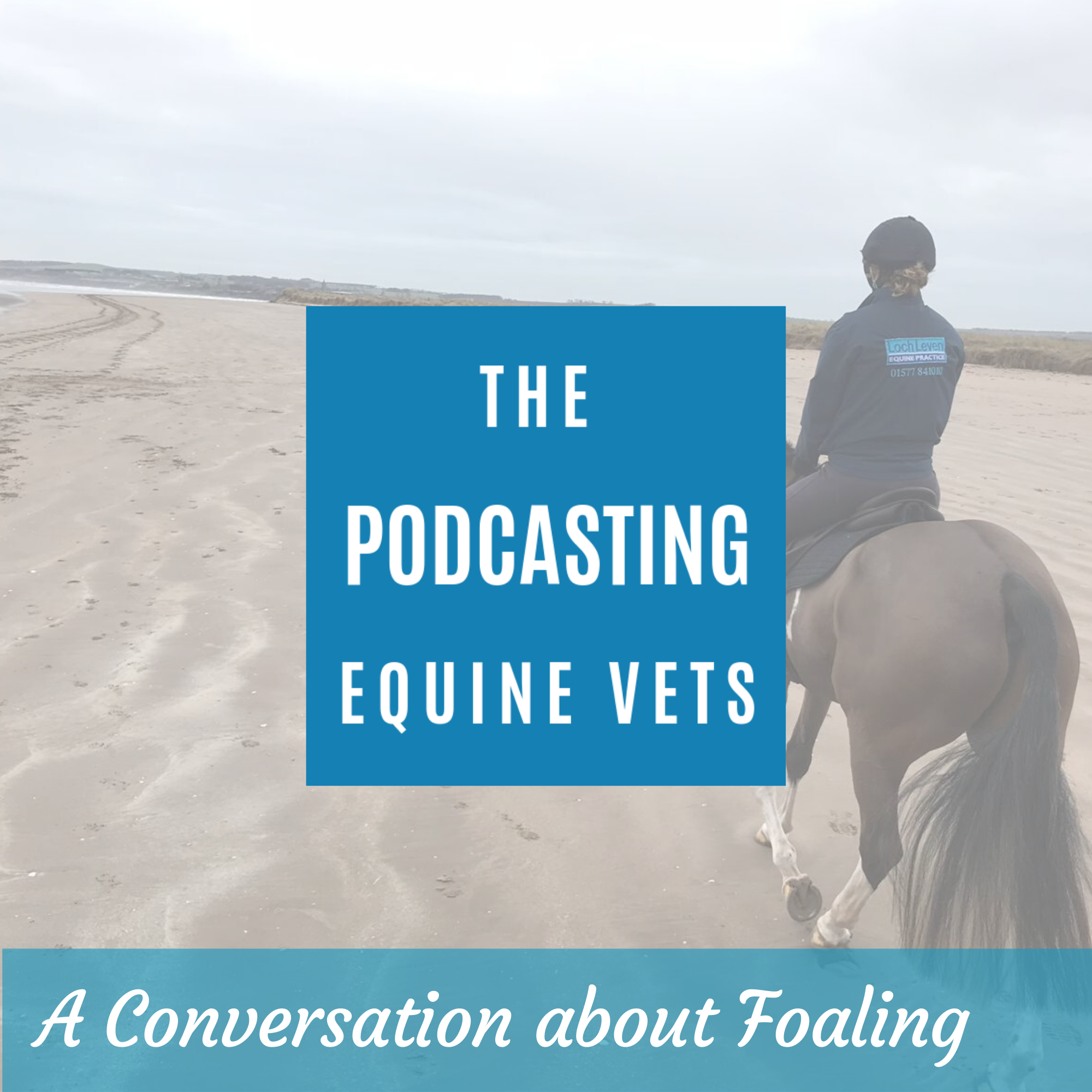A Conversation About Foaling