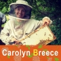 Artwork for 130 - Carolyn Breece - Should you keep bees?