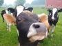 Artwork for TSRP #363: The Milking Parlour