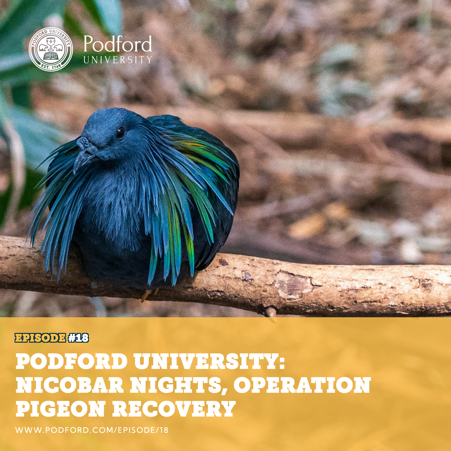 Podford University: Nicobar Nights, Operation Pigeon Recovery