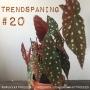 Artwork for 20. Trendspaning. Nio trendiga krukväxter 2018