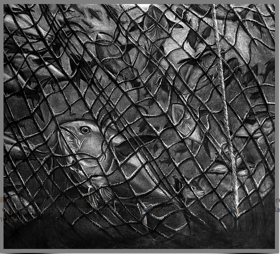 "Yvonne Neth's ""...Gone Tomorrow: Tuna Snarled in Commercial Fishing Net, Majuro, RMI"""
