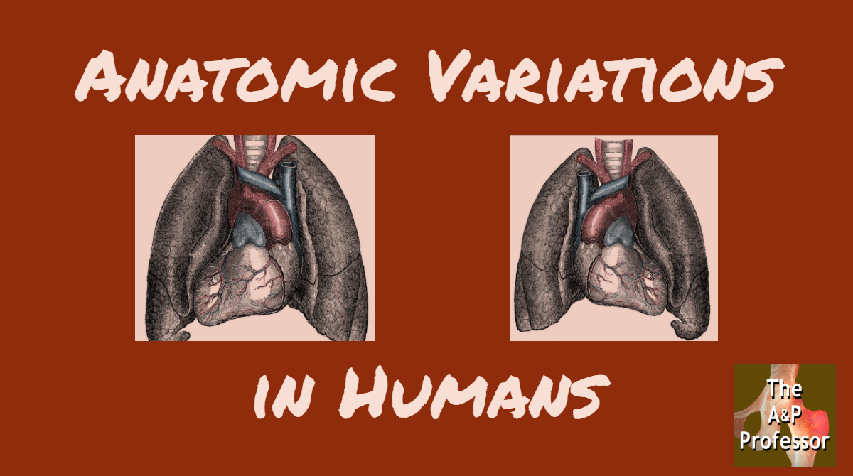 anatomic variation