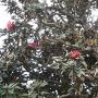 Artwork for E45 Sushma Shrestha - Rhododendron