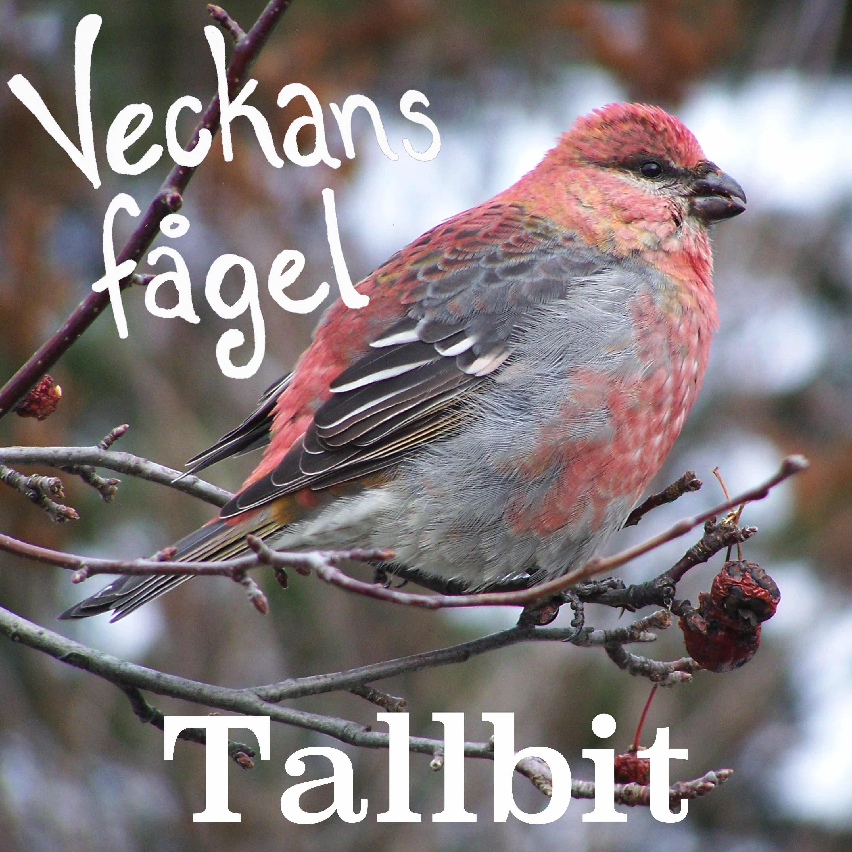 Tallbit