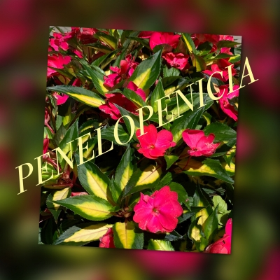 Penelopenicia's podcast show image