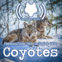 Artwork for 501: Communities Can Co-Exist With Coyotes