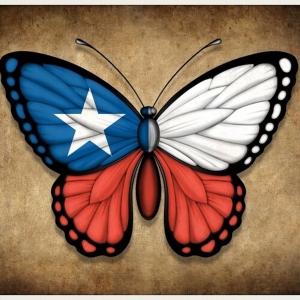 Mariposas Chilenas