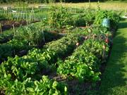 La horticultura - Vocabulario en ingles
