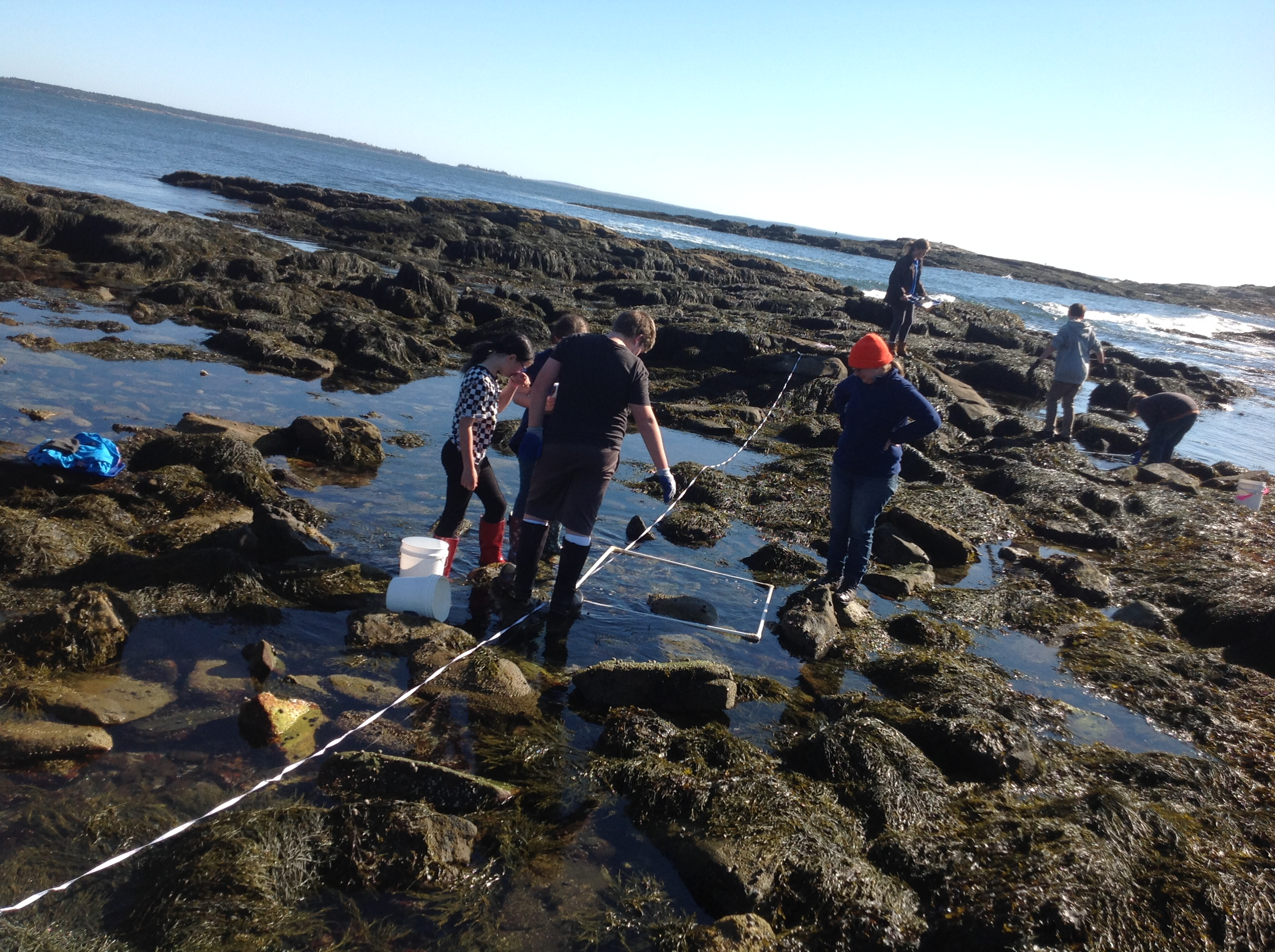 BMS student during crab data collection on the coast of Maine