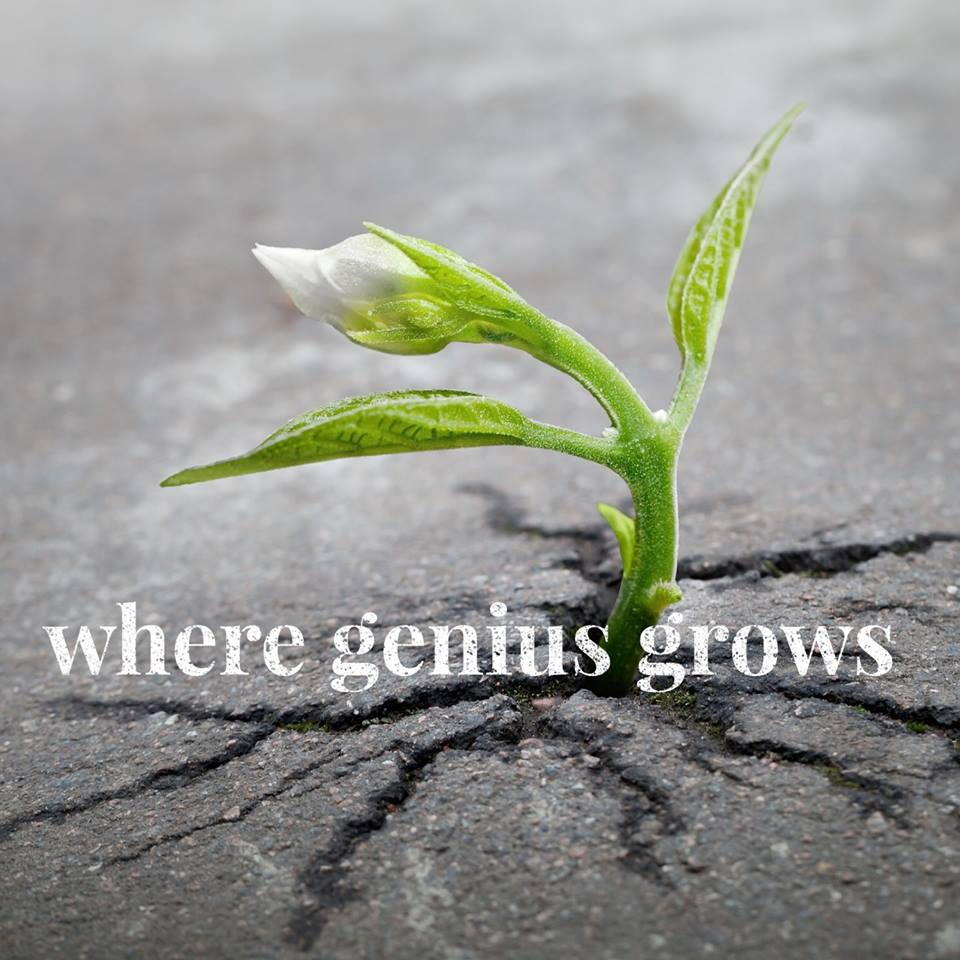 Where Genius Grows show art
