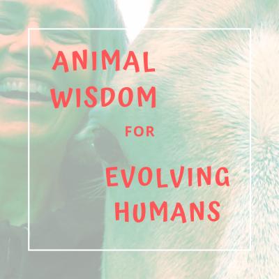 AnimalWisdomForEvolvingHumans's podcast show image