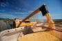 Artwork for Política de comercialização de grãos: foco na margem