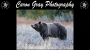 Artwork for Meet Wildlife Photographer Caron Gray!