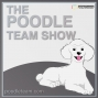 "Artwork for The Poodle Team Show Episode 44 ""Holiday Networking Mixer"""