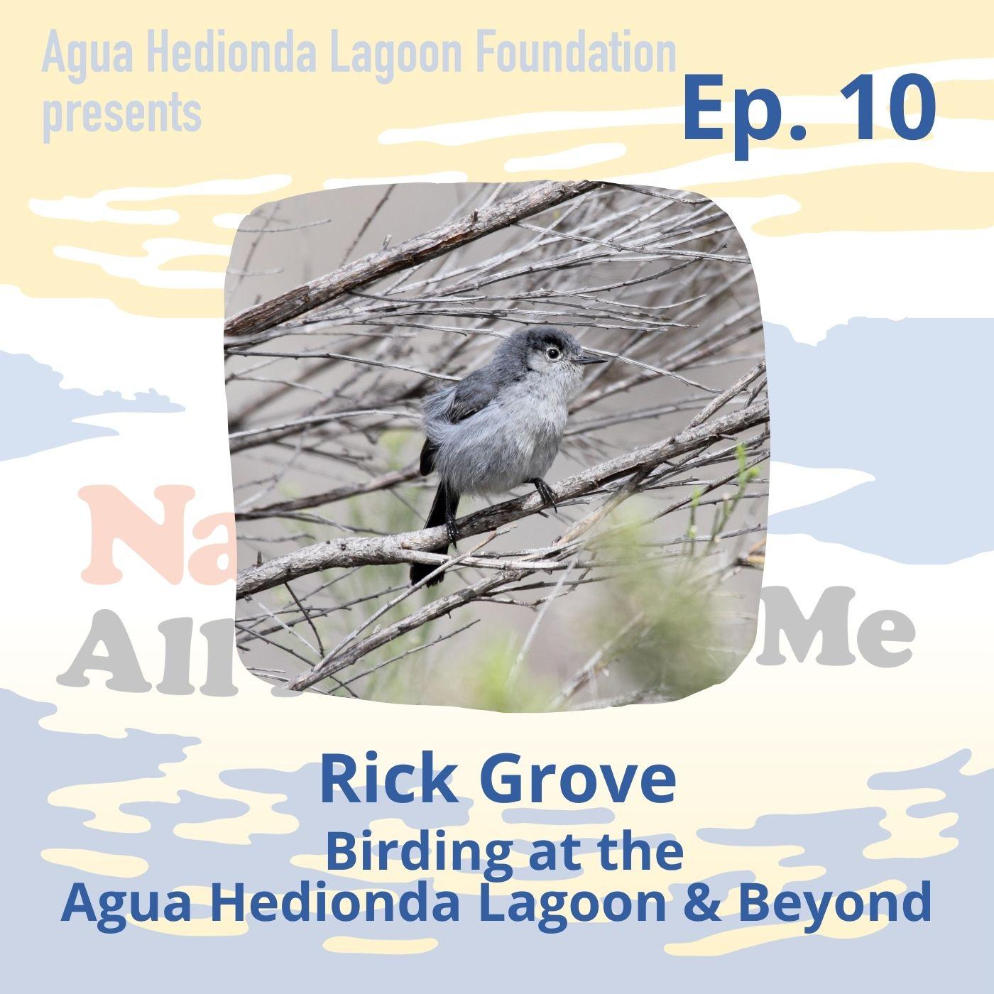 Ep. 10 Birding at the Agua Hedionda Lagoon & Beyond