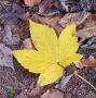 Artwork for 063 Was der Herbst uns lehren kann