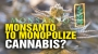 Artwork for Monsanto to MONOPOLIZE GMO cannabis?