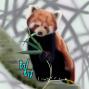 Artwork for Red Panda