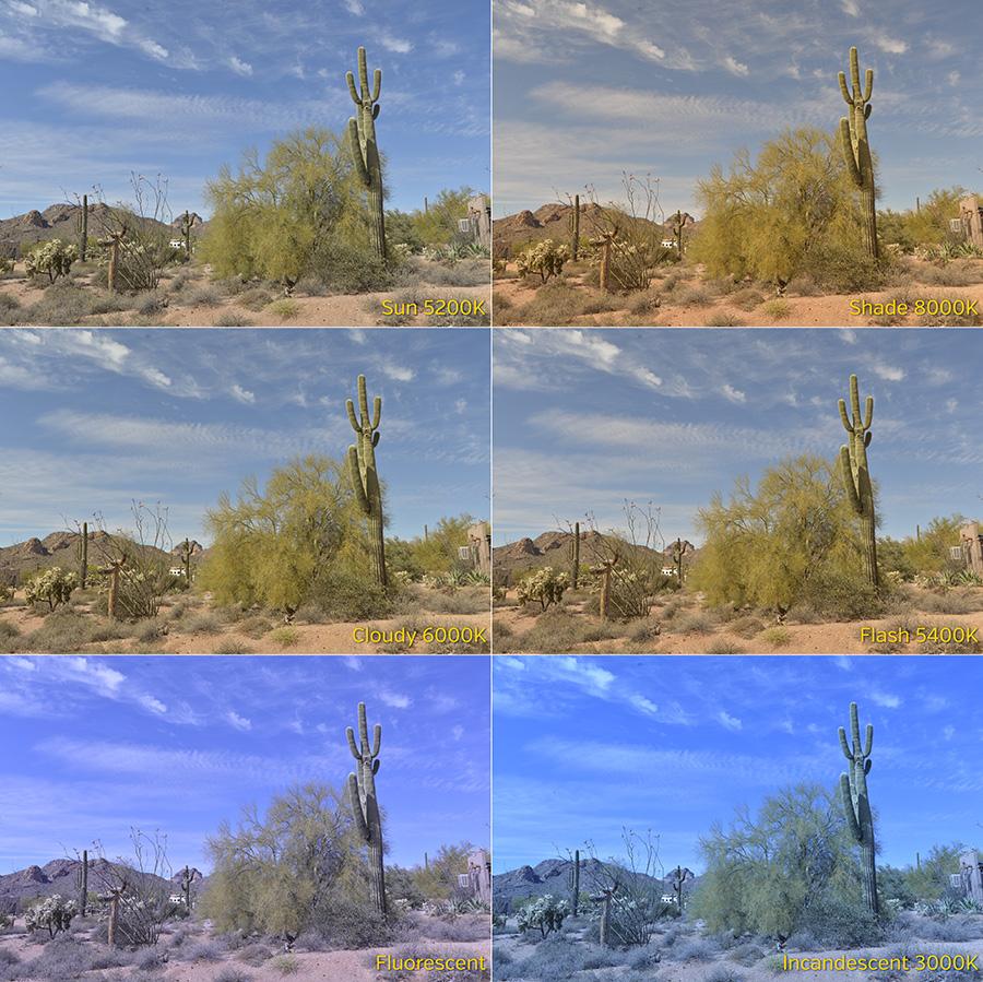 cactus color comparo