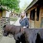 Artwork for Deux chevaux et un poney ont été blessés par plusieurs tirs de pistolet à plombs