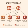 Artwork for Association of Sickle Cell Trait With Ischemic Stroke Among African Americans