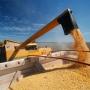 Artwork for Milho em 2020: foco na safrinha e no consumo doméstico