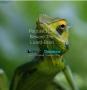 Artwork for Podcast115: Congregation 2018 - Beware The Lizard Brain
