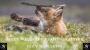 Artwork for Introducing Wildlife Photographer Izzy Edwards