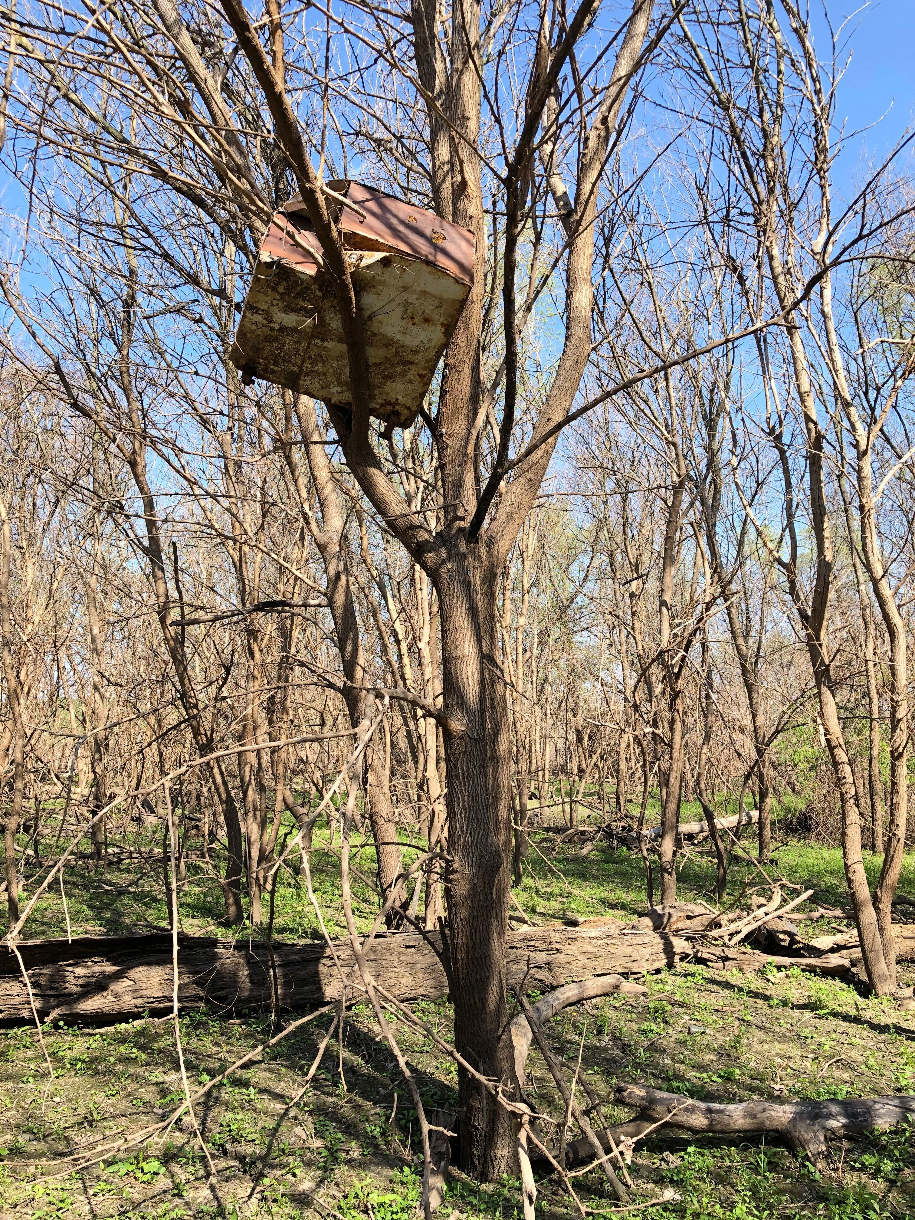 A chest freezer suspended in a tree 20 feet in the air.