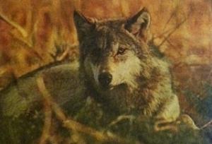 Analysis Time - Wolf Debate.