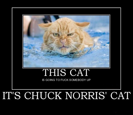 05.05.12: Chuck Norris Episode, Plus Motor Mounts, Turn Signals, Miatas & Tornadoes, Old Kung Fu Asskickers, New Viper VS Old, Pedal Footwork, Creature's Truck Wreck, Grilled Cheese, Saigas, Bullet Buttons, & Robin Trower