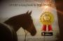 "Artwork for 505: Zoe Coade 2 - ""Top Ten Tips for Horses in Long Term Rest"""