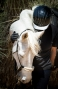 """Artwork for 609: Katharine Schreiber 4 - """"Ten Tips on Special Systems for Special Needs Equines"""""""