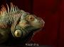 Artwork for 113: Jimmy & Rose Hunter, House of Ig: The World of Iguana Rescue