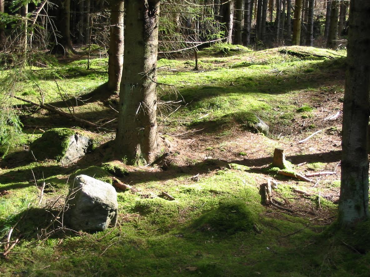 Forrest in April