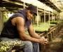 Artwork for Good Food Revolution: Will Allen of Growing Power