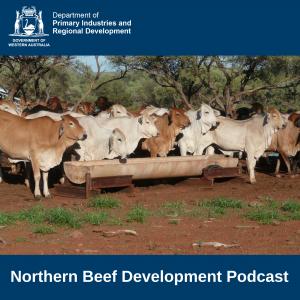 Northern Beef Development Podcast