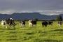Artwork for New Waves Across Australia's Organic Dairy Sector
