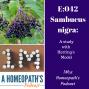 Artwork for Sambucus Nigra, a remedy study using the Hering model