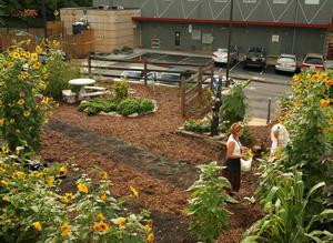 Charlotte's Rainwater Harvesting System