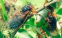 Artwork for Ep.12- John Cicada